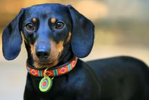 Amazing Dogs / dog photos including those with posh dog collars