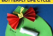 Butterfly cycle- πεταλούδα κύκλος ζωής