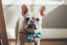 Frenchies / My love for French bulldogs...