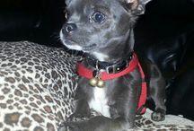 OMG Beautiful little dog !!!