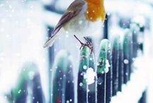 Maintenant l'hiver