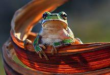 Animal photography / The animal kingdom