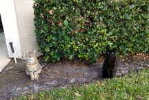 Tigger and Tiger / Two sweet female feral cats from my neighborhood.