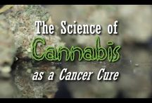 ✪ Cannabis Documentaries ✪
