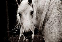 animals / by Barbara Hart