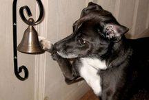 Hunde decor inspo