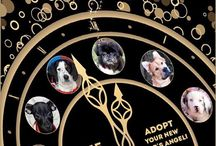 Happy Walk Happy Dog 2015 / all things Related to HWHD Pet Care Services