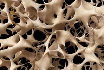 Biological patterns