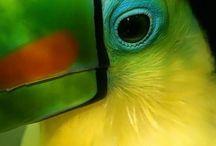 Tukan kuşları