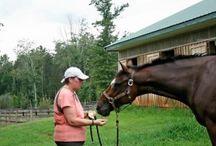 Homemade Horse Treats