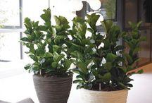 Natural Look / Deze groep plantenbakken is afgewerkt met natuurlijke materialen of hebben een natuurlijke uitstraling.