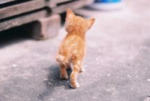 Cute Animals / by Erika Logiudice