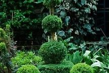 Topiary and Espalier