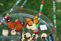 motýlí krmítka