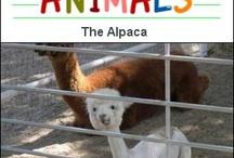 Unique Animals