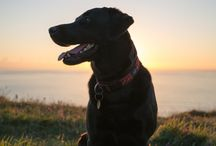 Dog friendly cottages and dog friendly weddings in Cornwall / Just a few of the lovely dogs who have stayed at Cosawes Barton