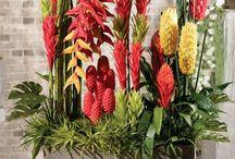 Tropical decor / Floral decor