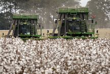 The Different Stages of Cotton / Cotton goes through many production processes and looks very different at each stage