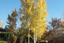 .Favorite Larger Trees