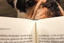 DEN NEPŘEČTENÝCH KNIH / Každý rok 31. srpna slavíme Den nepřečtených knih. V tento den upřednostňujeme před nákupem nových knih dočítání těch starých, které smutně čekají ve vašich knihovnách, až se do nich pustíte.