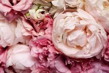 Bouquet Inspiration / Bouquets, wedding bouquets, flowers, blooms, blossoms
