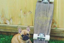 Dogs and Boards / We love dogs and skateboards and dogs.