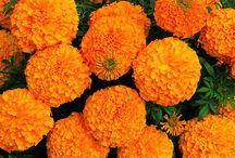 flores tatto