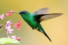 animals, birds and nature
