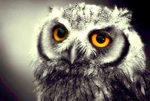 Fascinating OWLS / by Gail Yobe