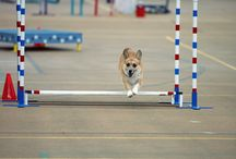Dog Agility / People and pups that ROCK dog agility-the super fun sport with your dog!