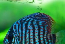 Aquarium! / by Ashley Linton