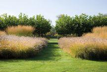 Ogród przy Rafowej_A