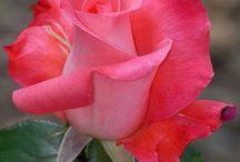 Flores (reais)