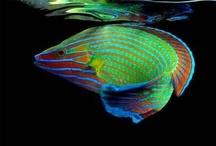 Océans x Créatures / au fond des océans