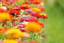 La nature... des petits bonheurs...