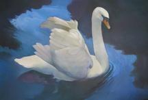 swan / by Rachael Mitchell