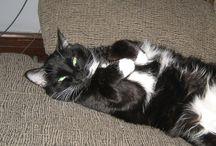 Cat Behavior Articles