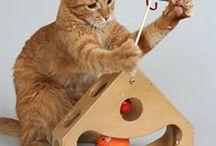 kitty entertainment