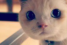 Cats (︶ω︶)