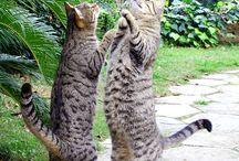 Kittens!!!!!!!