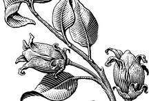 Engravings & Illustrations