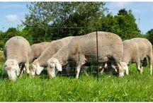 Weidezaun / Weidezäune für Pferde, Ponys, Schafe, Ziegen, uvm. Weidezaunbänder und Litzenmateriel mit Zubehör abgestimmt aud das patentierte Litzclipsystem