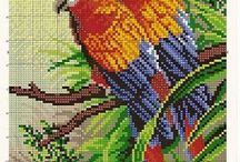 Cross stitch - parrots