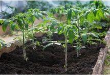 Plante pe terasa