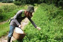 High profit, small farming