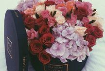 Roses / instagram:  kassarine