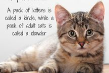 Kitten Kaboodles / Betcha didn't know this about cats.....