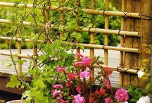 bamboo e jardim