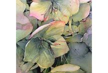 helleborus aquarel