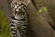 Fabulous Felines / Amazing Cats from around the world